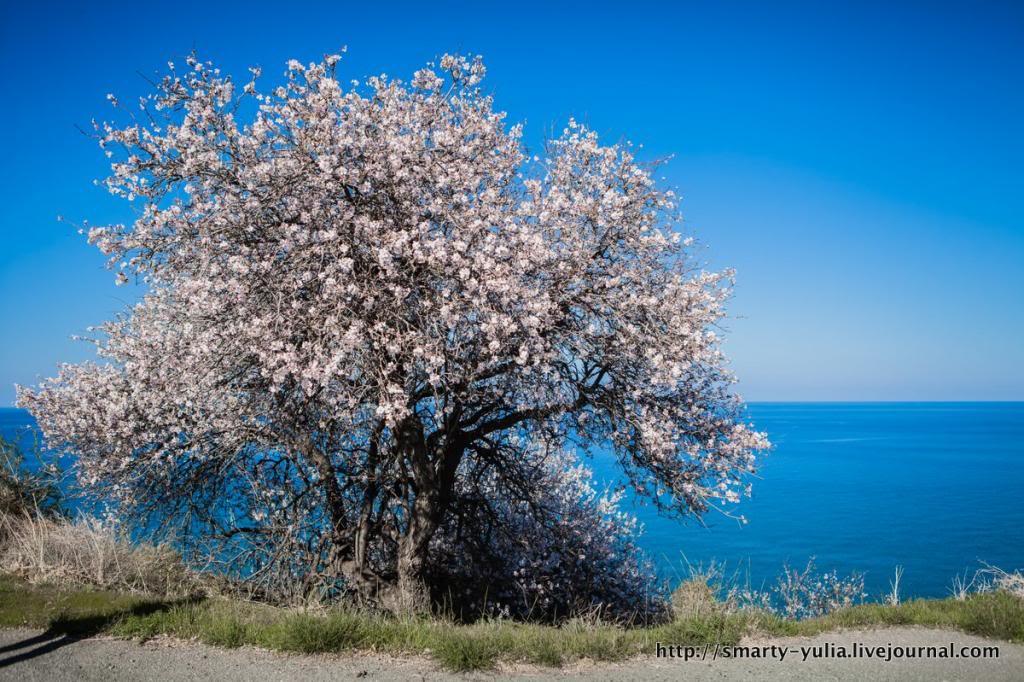 photo 2014-02-08_Cyprus-0020.jpg